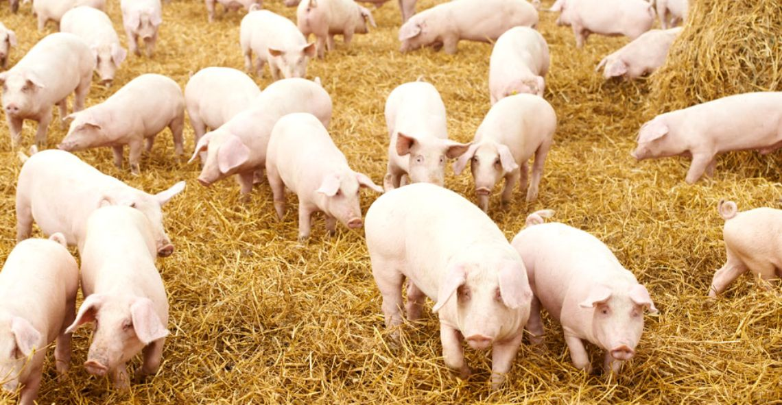 Benefits of porcine co-products